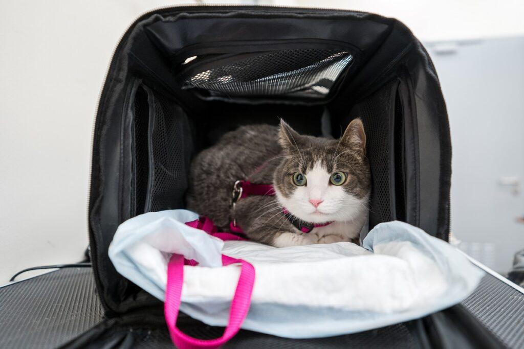 Эксперт: означает ли нечистоплотное поведение кошки месть владельцу