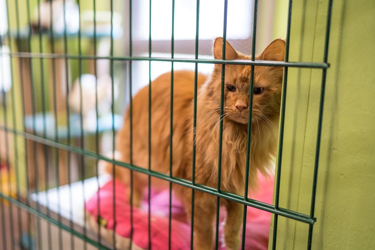 России не хватает 785 приютов для кошек и собак