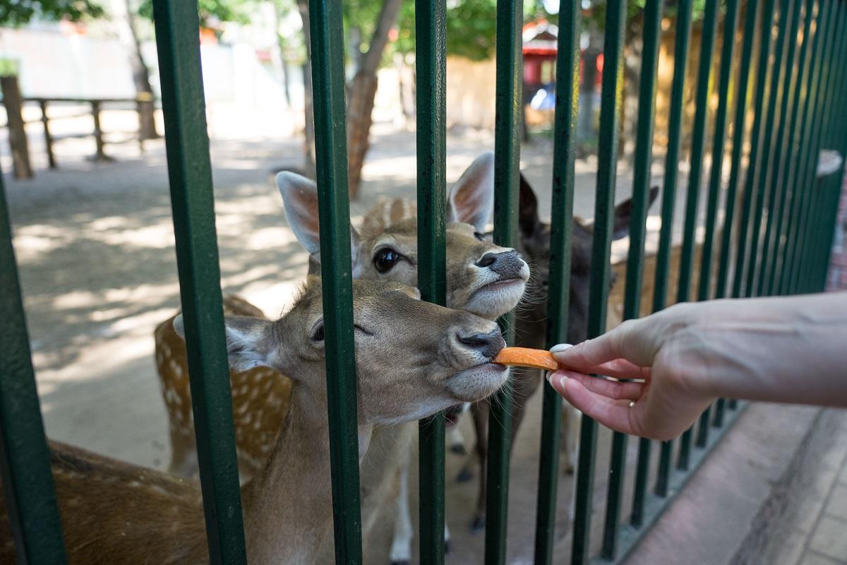 Шесть цирков и зоопарков в Приморье прошли лицензирование в Россельхознадзоре