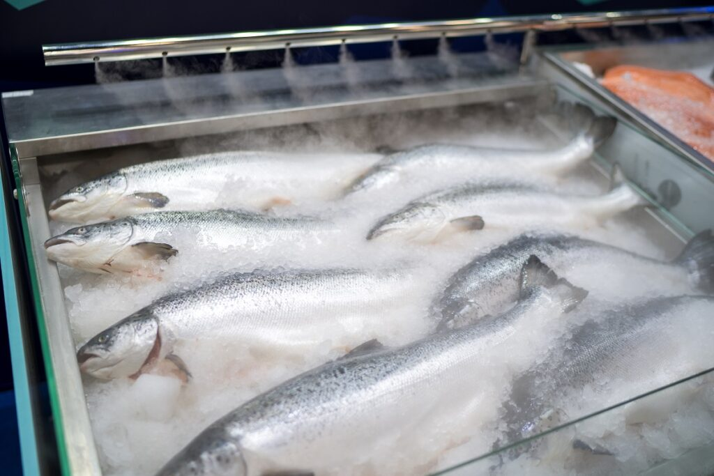 На севере России запустят программу «Арктические лососевые»