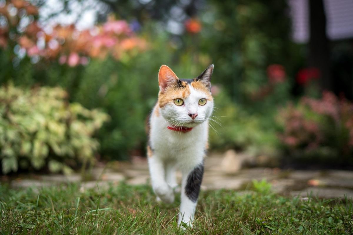 Исследование: домашние кошки могут передавать токсоплазмоз диким животным