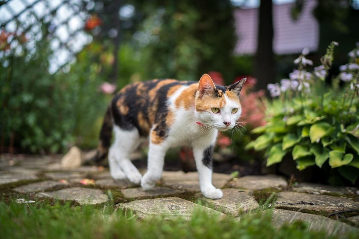 Комитет Госдумы поддержал введение штрафов за выброшенных кошек и собак