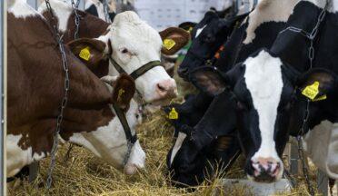 Госдума поддержала нормы об ужесточении требований к применению антибиотиков в АПК