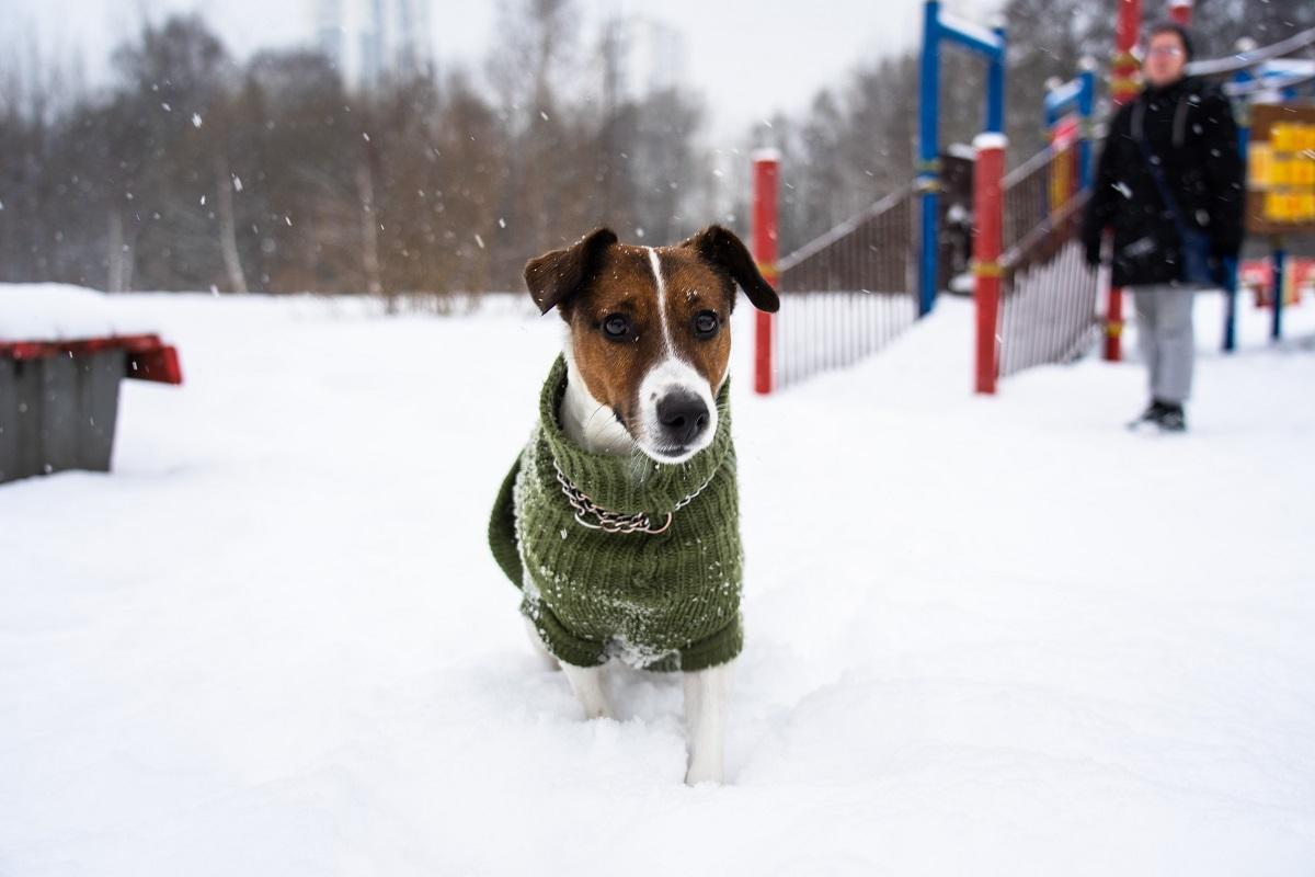 В РКФ сообщили, какие породы собак подходят для аллергиков