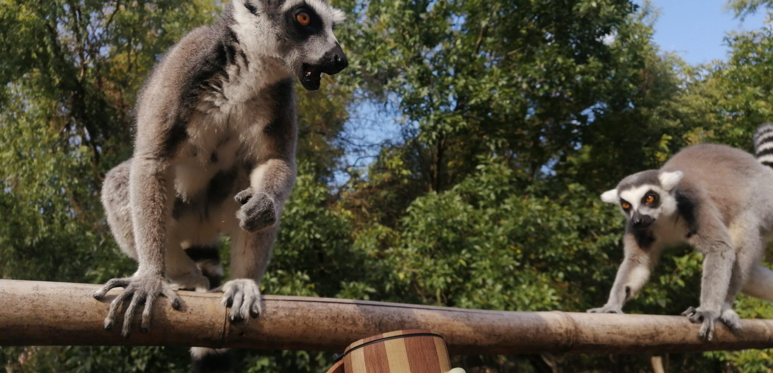 Редких экзотических животных из РФ хотели нелегально вывезти в Китай