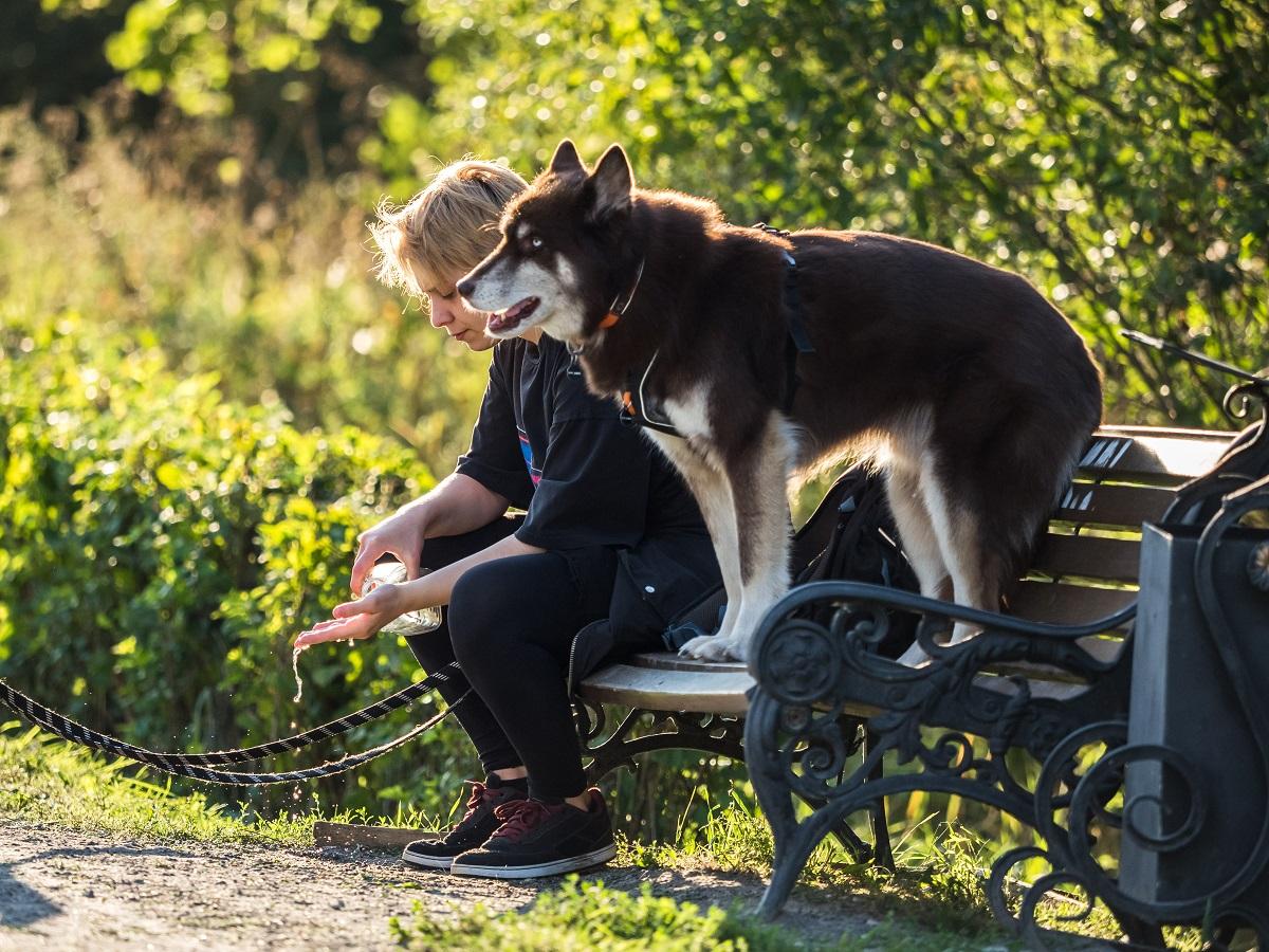 Владельцы собак назвали Москву неудобной для проживания с питомцем