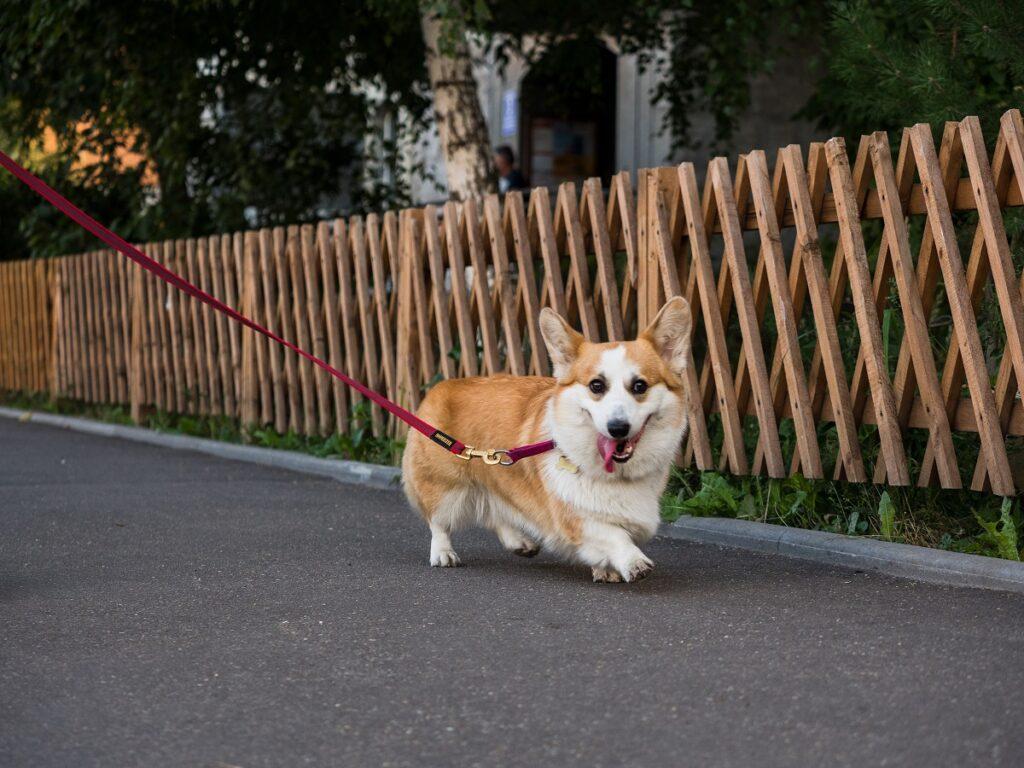 РКФ сообщила о переносе интернациональных выставок собак из-за локдауна