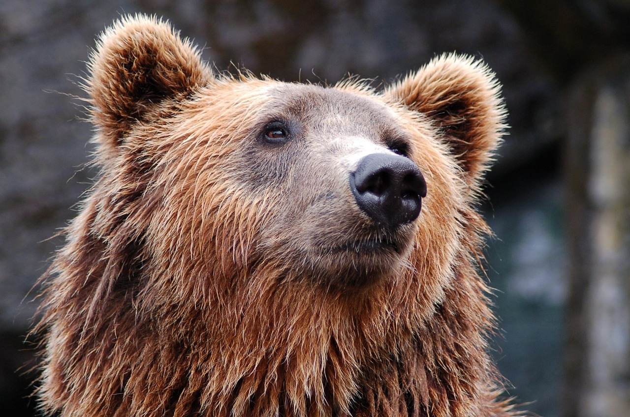 Названа причина гибели медведей в зоопарке Челябинска
