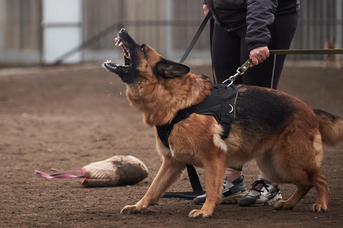 Владелец собаки, покусавшей ребенка в Пермском крае, заплатит 100 тыс. руб.